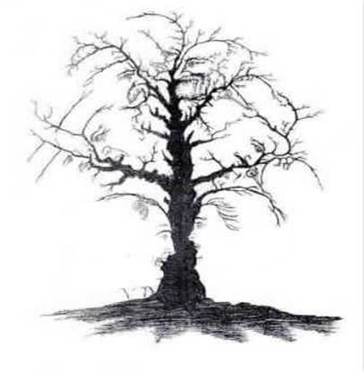 CAN YOU SEE 10 FACES IN THIS TREE?