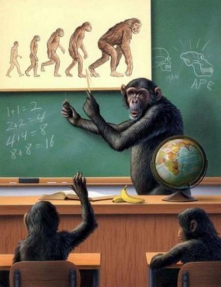 Monkey Evolution