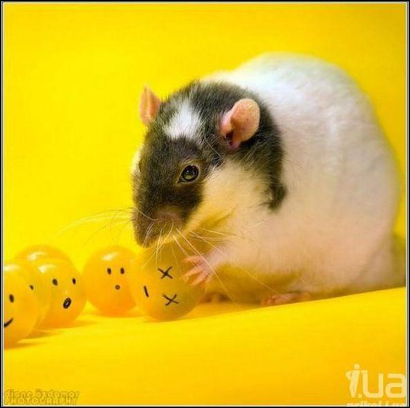 Diane Ozdamar. Rat