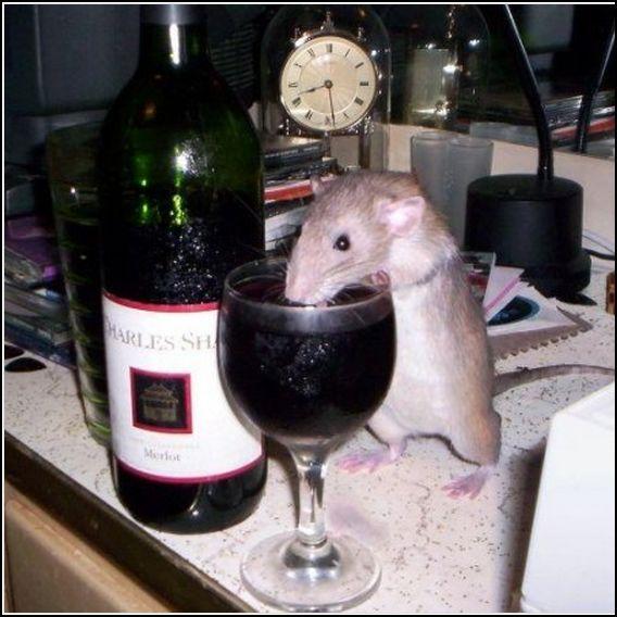 Rat&Wine