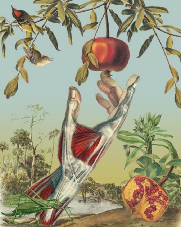 Juan_Gatti_Anatomical_Botanical_Studies_6