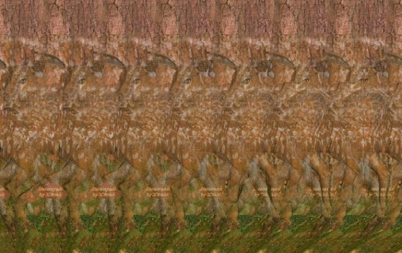 Stereogram2