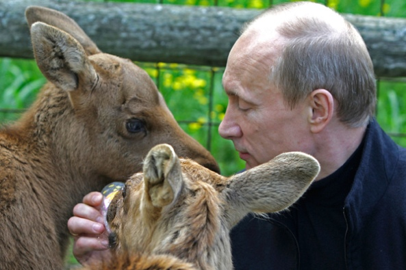 Putin and Animals 1