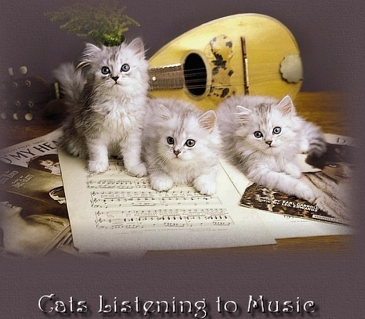 kitties and Music