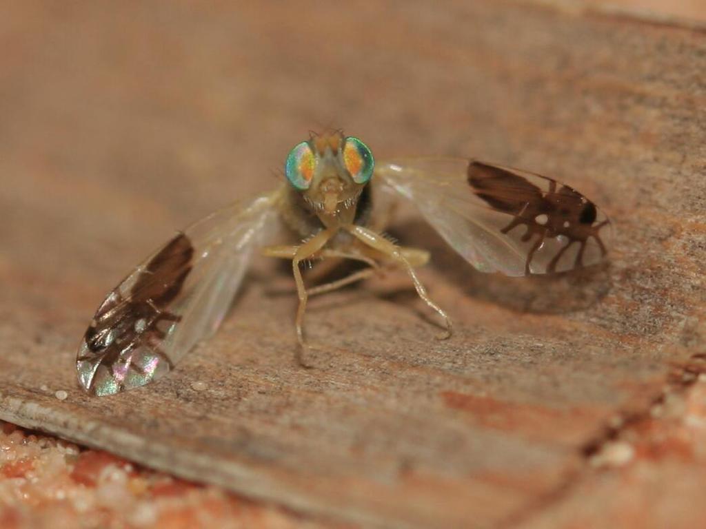 Diskusné fórum 3-flies