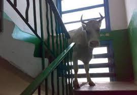 stairwell56
