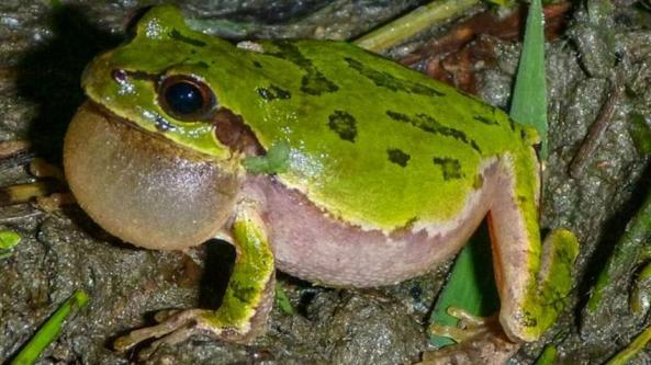 sn-frog_0.jpg