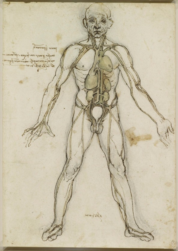 Leonardo da Vinci (Vinci 1452-Amboise 1519) The major organs and vessels c.1485-90 Pen and ink with brown and greenish wash, over black chalk | RCIN 912597