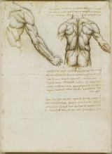 Recto: The muscles of the back and arm. Verso: Studies of the in