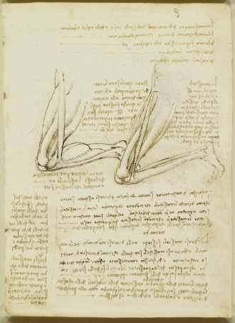 Recto: The muscles of the leg, with notes. Verso: Notes on the s