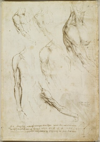 Recto: The muscles of the shoulder and arm. Verso: The muscles o