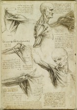 Recto: The superficial anatomy of the shoulder and neck. Verso:
