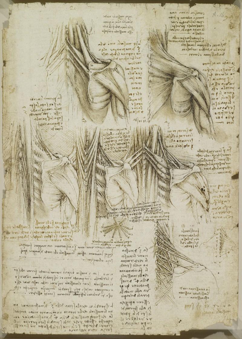 Leonardo The Anatomist Contra Spem Spero Et Rideo